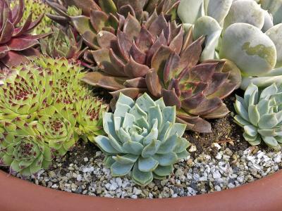 homemade potting soil for succulent plants ehow. Black Bedroom Furniture Sets. Home Design Ideas