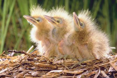 how to help a hurt baby bird