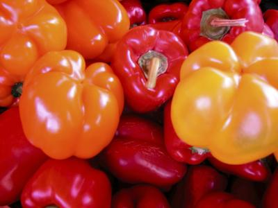 how to grow paprika from seed