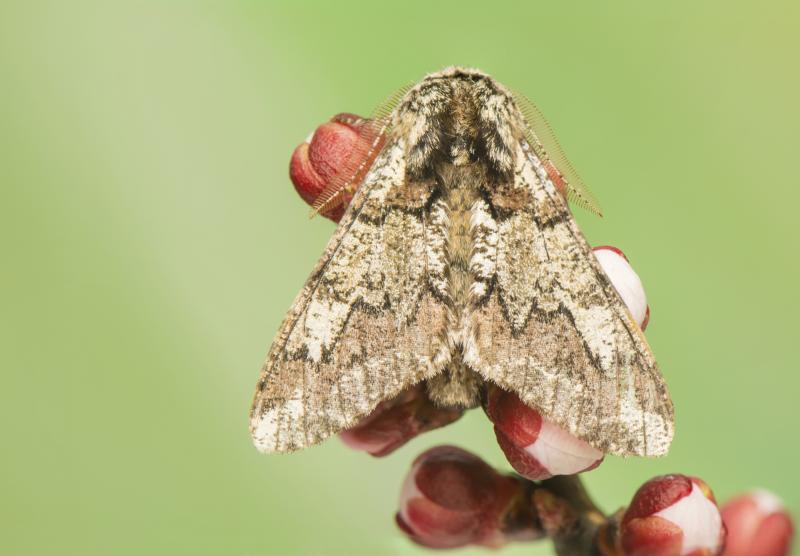 How To Kill Gypsy Moths Ehow