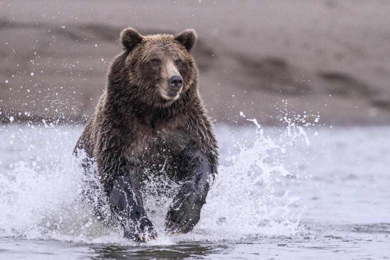 The Best Bear Guns
