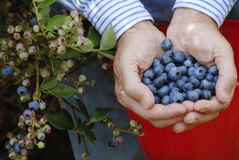 How To Grow Raspberries Ehow