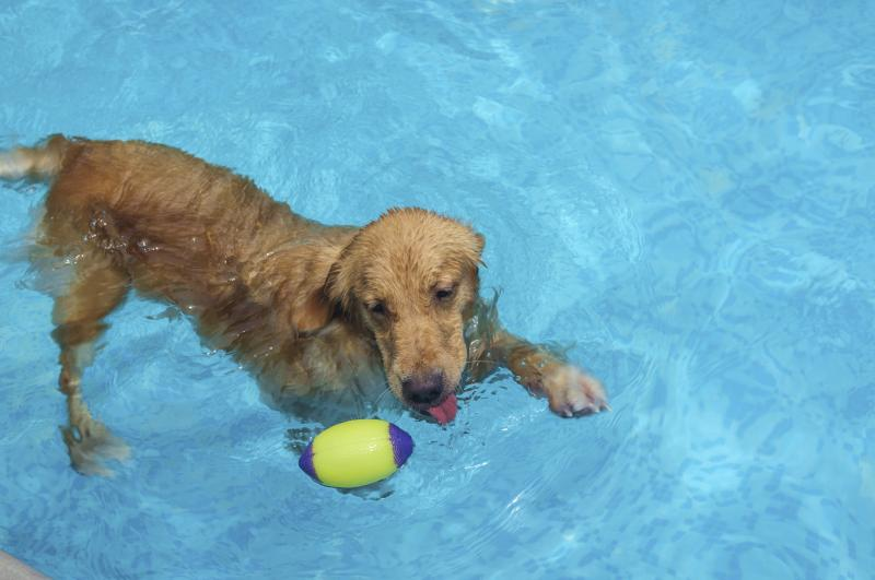 The Effects Of A Chlorine Pool On Dogs Ehow