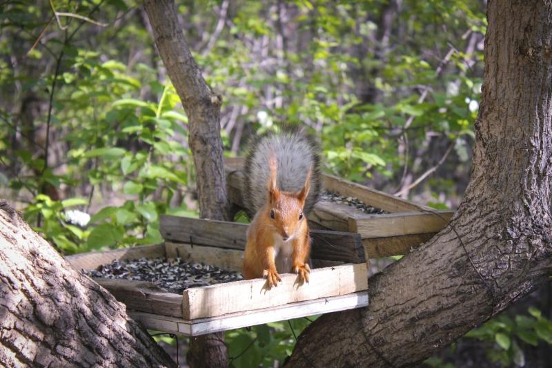 How to Keep Squirrels Out of the Bird Feeder | Gone ...