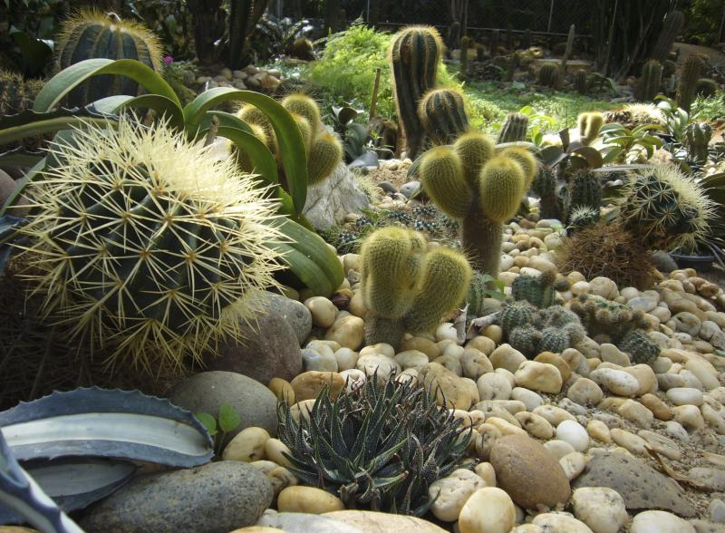 are succulents perennials with pictures ehow. Black Bedroom Furniture Sets. Home Design Ideas