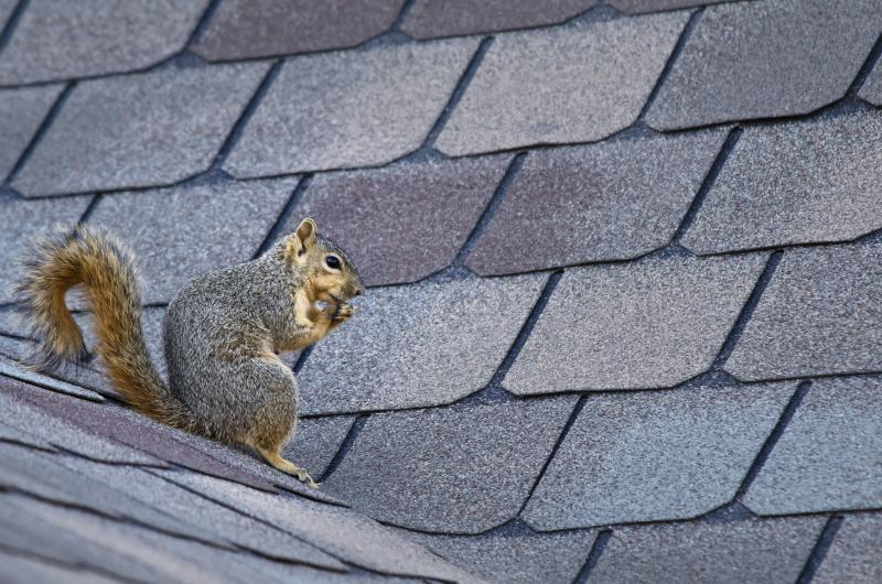 How To Keep Squirrels Out Of The Attic Ehow