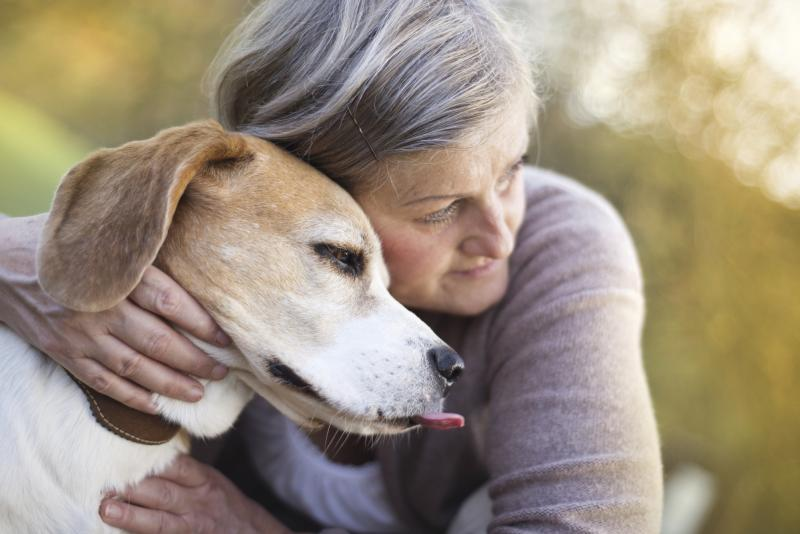Pet Therapy Dog Certification