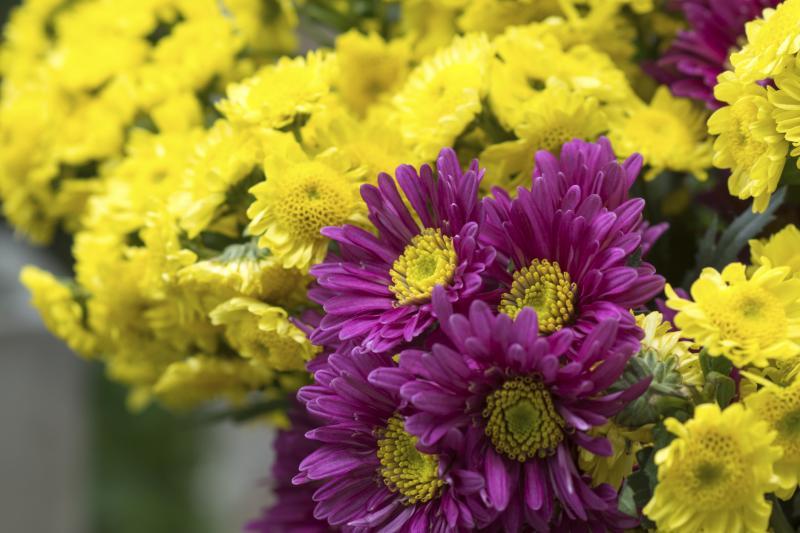 Wholesale Wedding Flowers - DIY Ideas