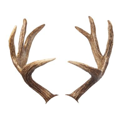 The Uses For Deer Antlers Gone Outdoors Your Adventure