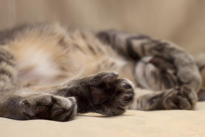 cat smartphone verizon