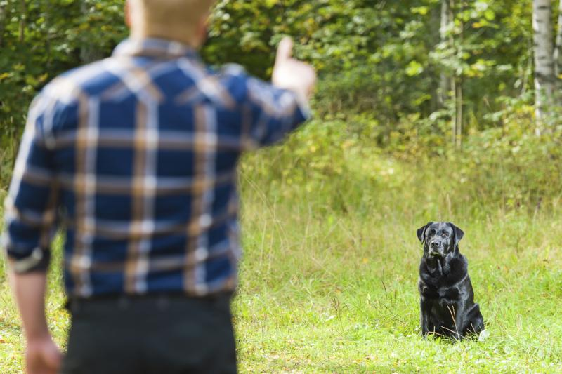 how to get rid of dog poop smell in yard