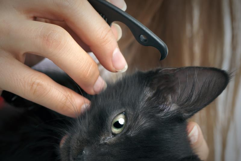 how to clean cat ear infection