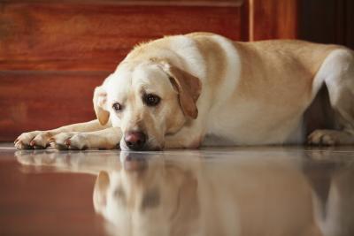 Why Does My Dog Keep Getting Diarrhea