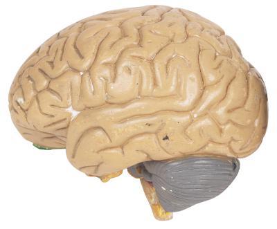 Onnit alpha brain australia photo 1