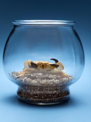 African Dwarf Frog Sinking Pellets