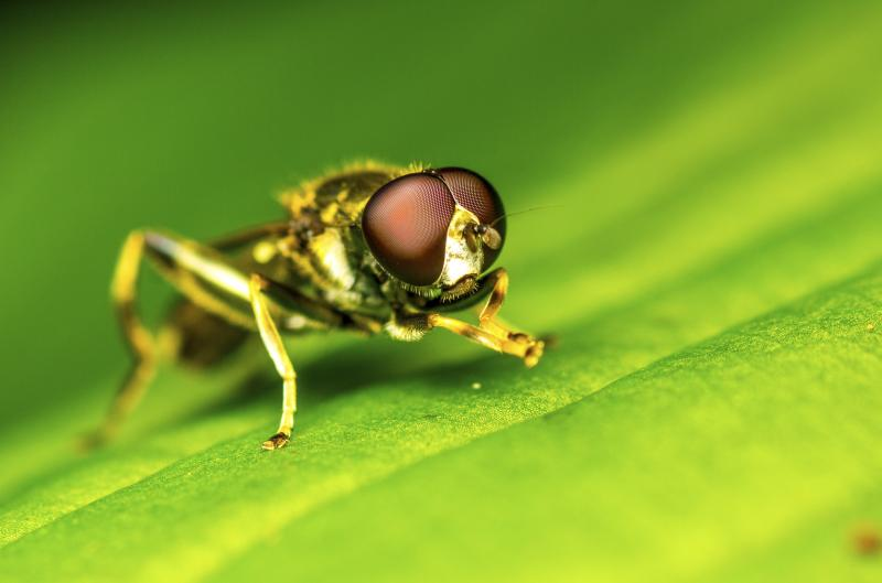 how to get rid of fruit flies ehow