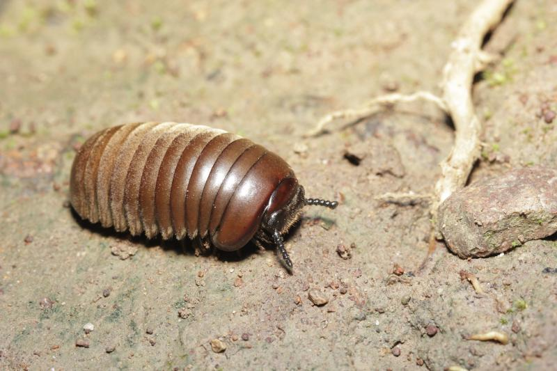 types of bugs found in basements with pictures ehow
