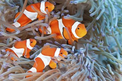 How to take care of a clown fish ehow for Clown fish care