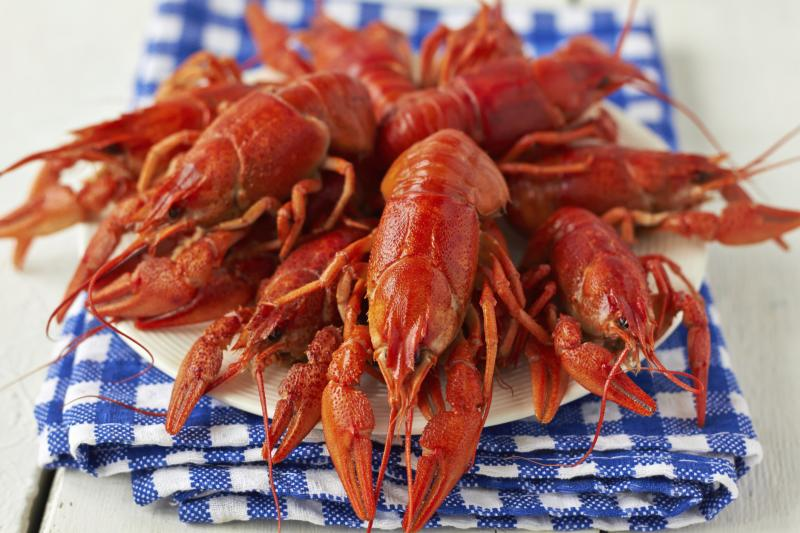 Fishing for Crayfish in Washington State | Gone Outdoors | Your