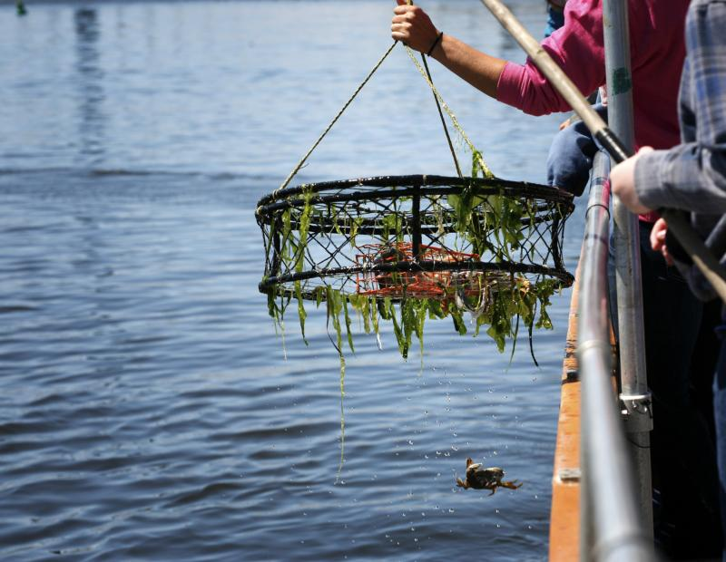 Crab fishing in washington state gone outdoors your for Fishing license washington state