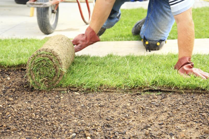 How long does it take for sod to take root with pictures ehow - Comment planter du gazon ...