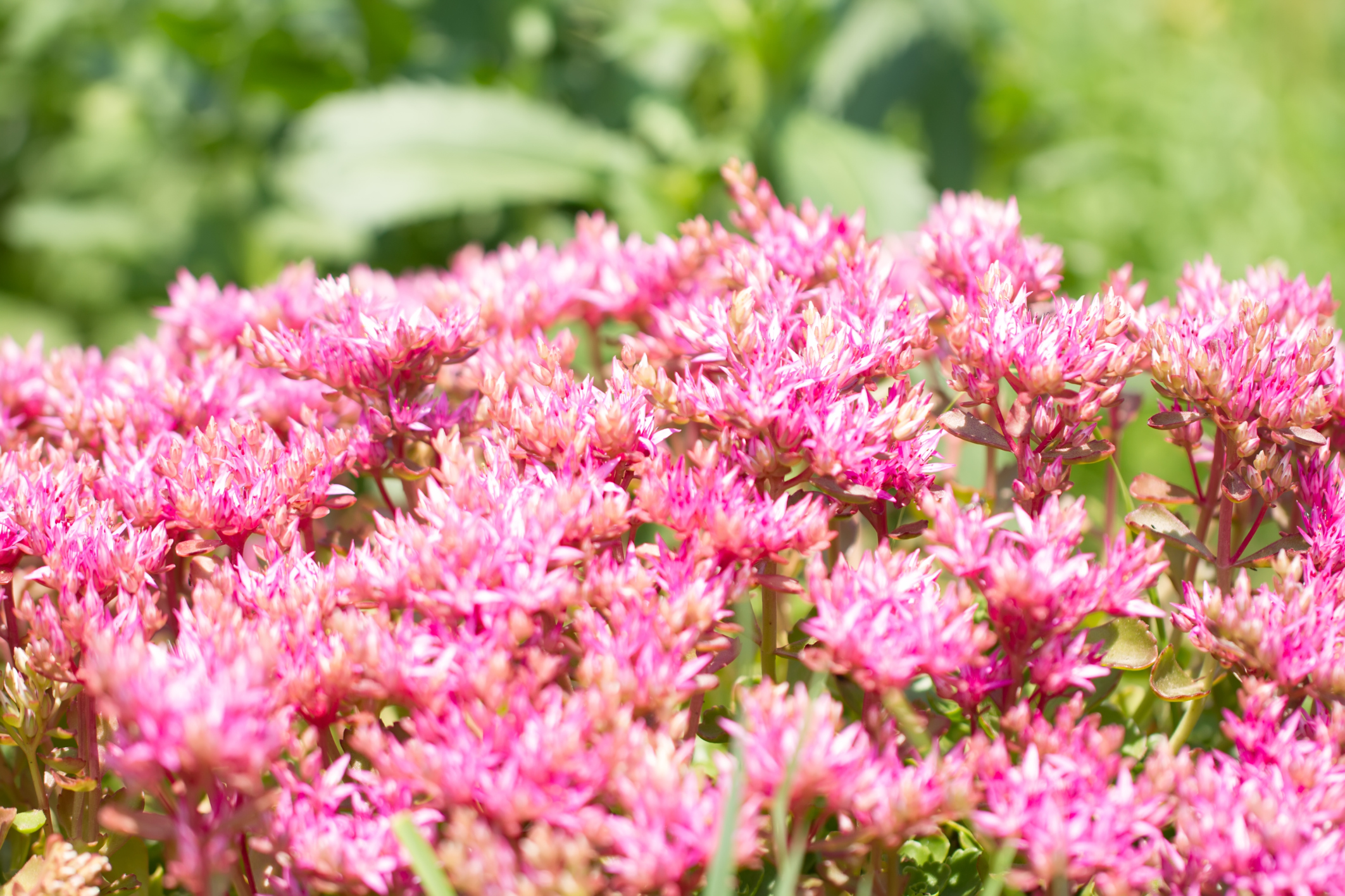 What Are Common Plants in South Carolina?   eHow