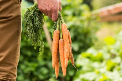 How To Grow Carrots With Pictures Ehow