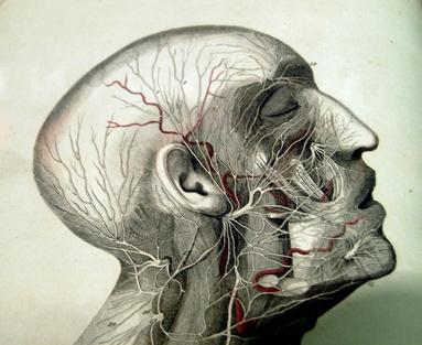 Head numbness, a disturbing lack, sensation