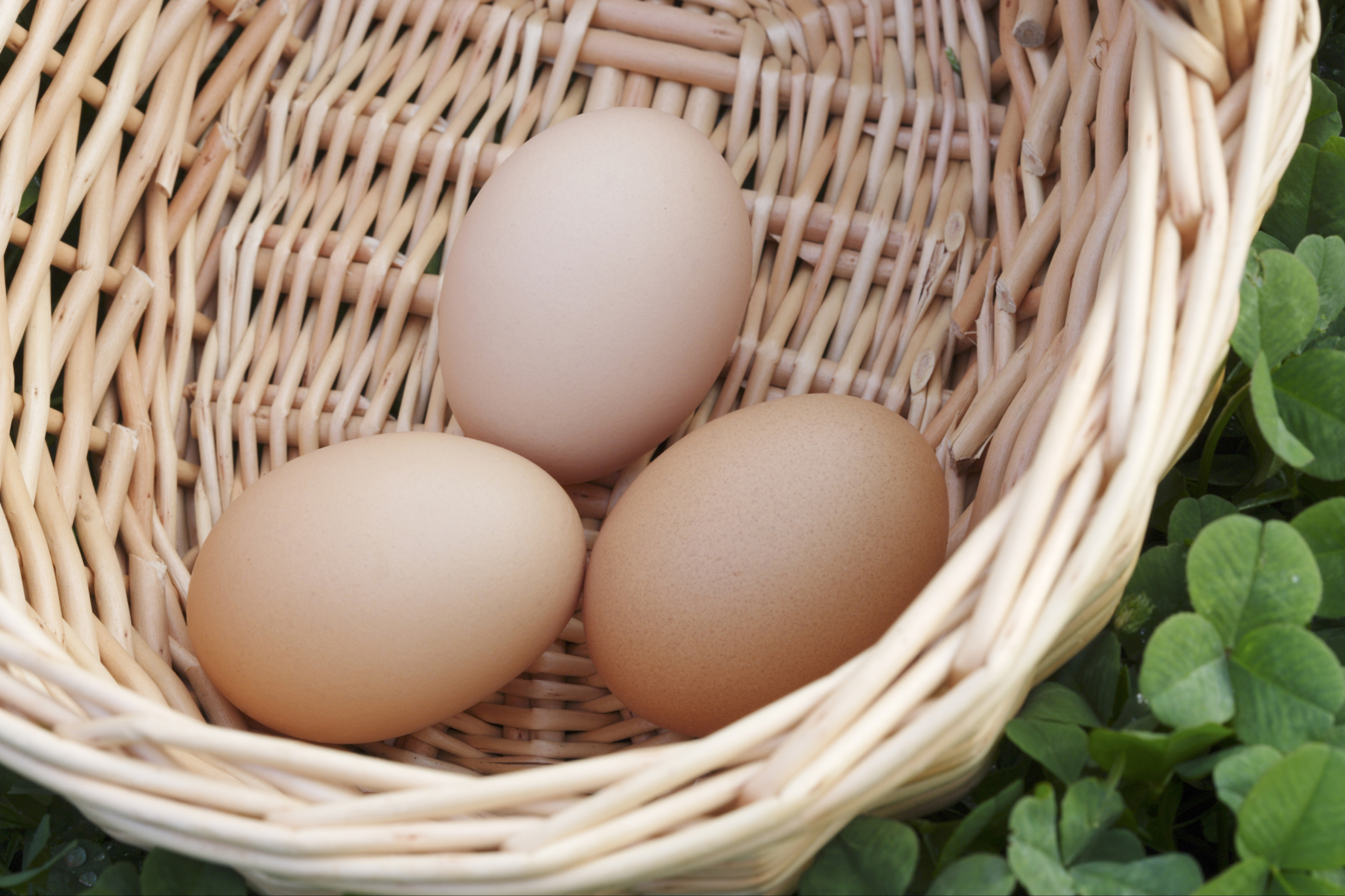 Nutritional Information Hard Boiled Egg Without Yolk  Nutrition Daily