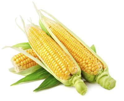 Examples of GMO Foods | LIVESTRONG.COM