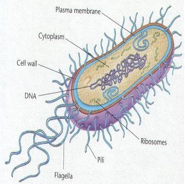 List of Single-Cell Organisms