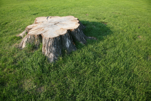 Tree Stump Removal Can Be A Bothersome Process