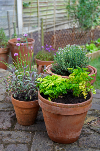 Plants Like Herbs That Do Well In Containers Are Good Candidates For Shallow Soil