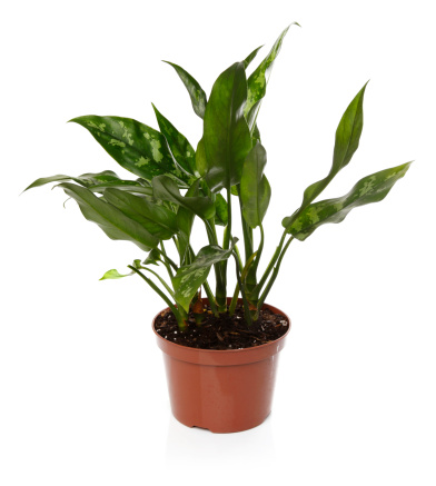 Plants For An Office With No Windows