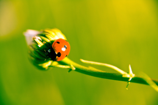 How To Get Rid Of Ladybugs In A House With Lemons
