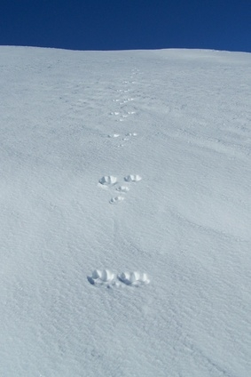 How To Identify Animal Foot Prints
