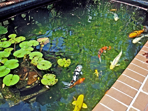 How to install ultraviolet lights in a pond homesteady for Uv pond light installation