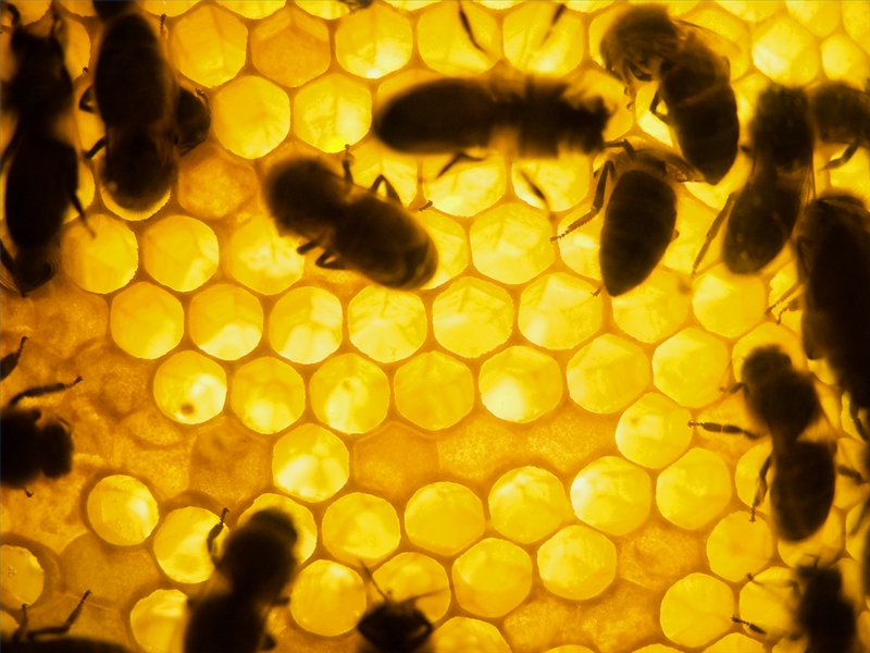 How to Start a Honey Bee Farm | Bizfluent