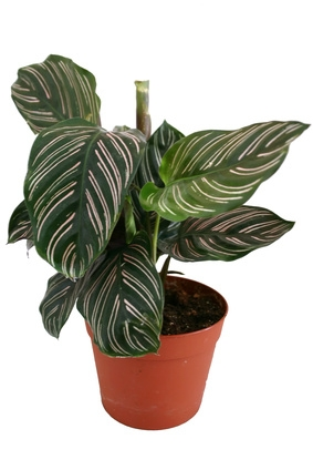 identification of indoor house plants garden guides - Identifying Common House Plants