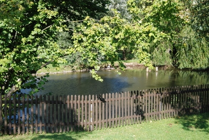 how to get rid of green algae in fish pond