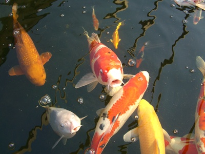 Disadvantages in Fish Farming