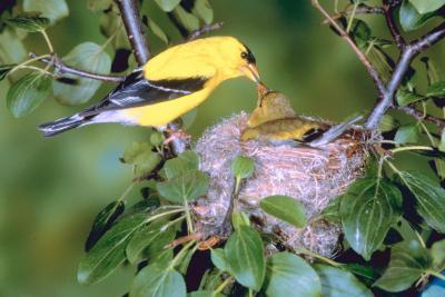 Goldfinch Birdhouse Instructions | HomeSteady
